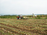 典型的な8月上旬の風景 一期作の収穫と二期作の不耕起播種が同時進行